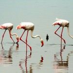 lake-manyara-national-park